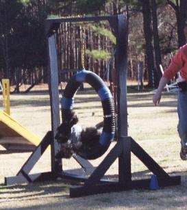 Bon Clyde Dog Training Sanford
