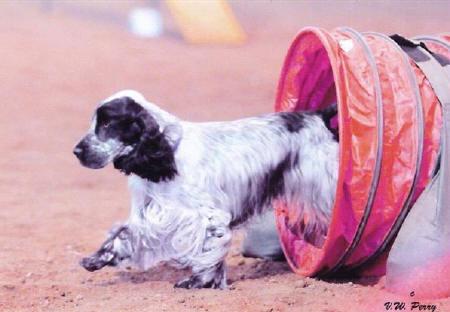 Merrimac Dog Training